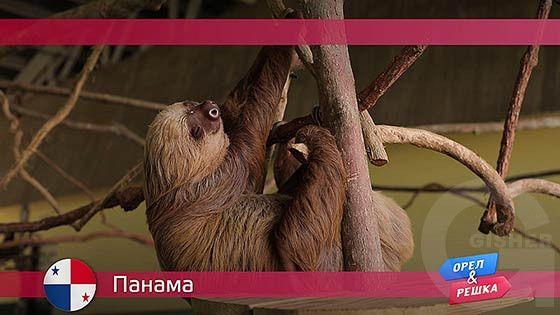 Орел и решка: Панама