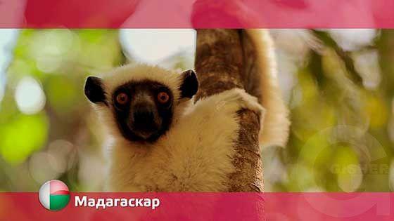 Орел и решка: Мадагаскар